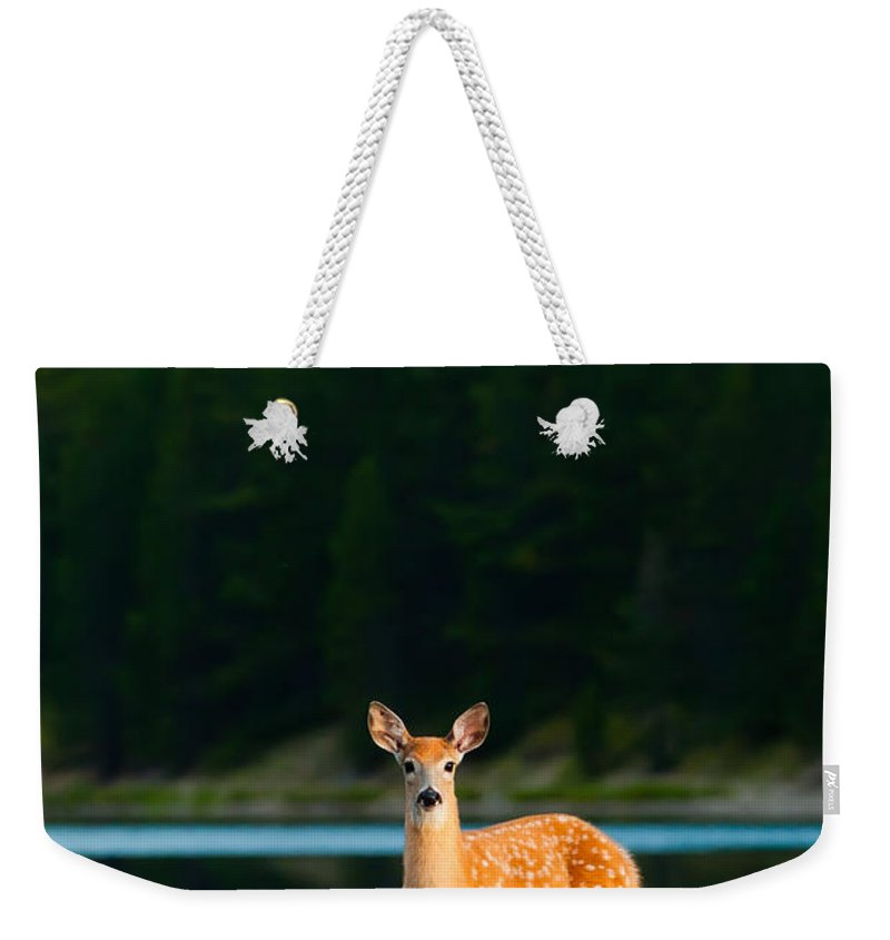 2006 Weekender Tote Bag featuring the photograph Fawn by Sebastian Musial
