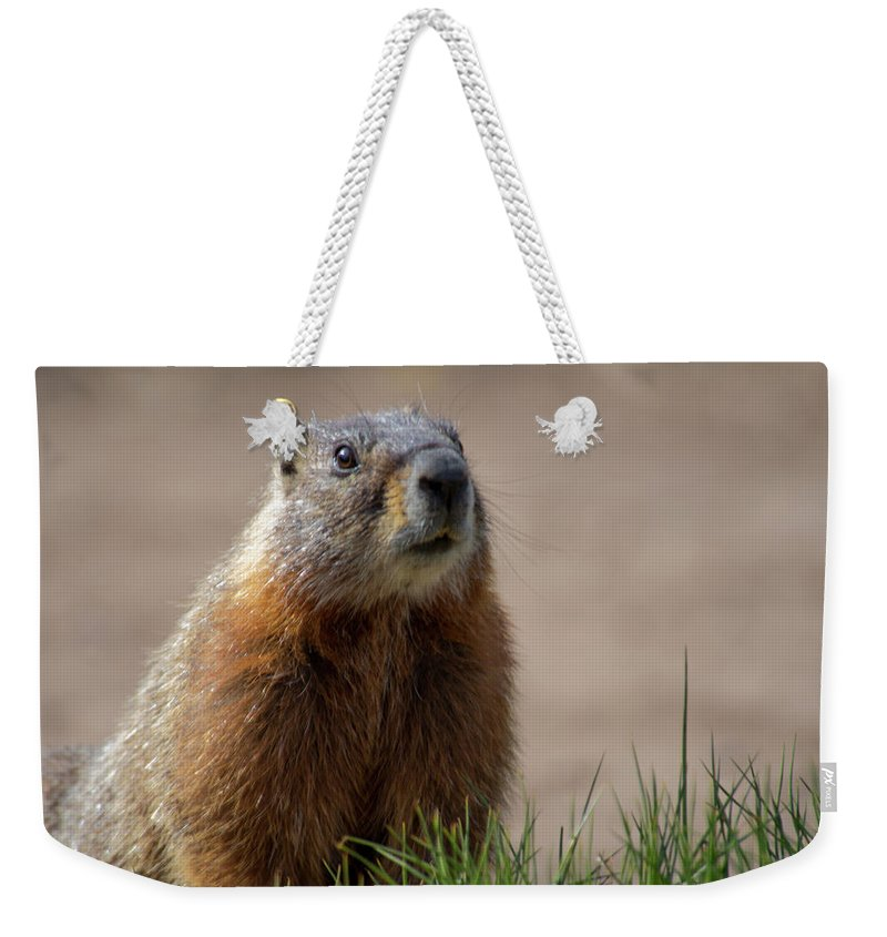 Wyoming Weekender Tote Bag featuring the photograph Fearless by Frank Madia