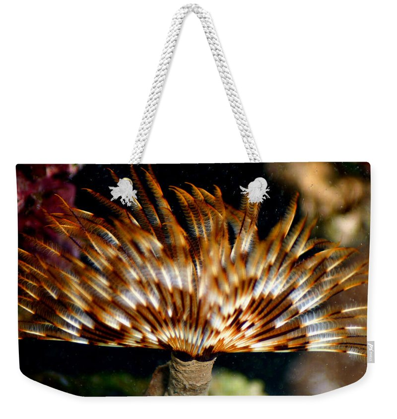 Feather Duster Weekender Tote Bag featuring the photograph Feather Duster by Anthony Jones