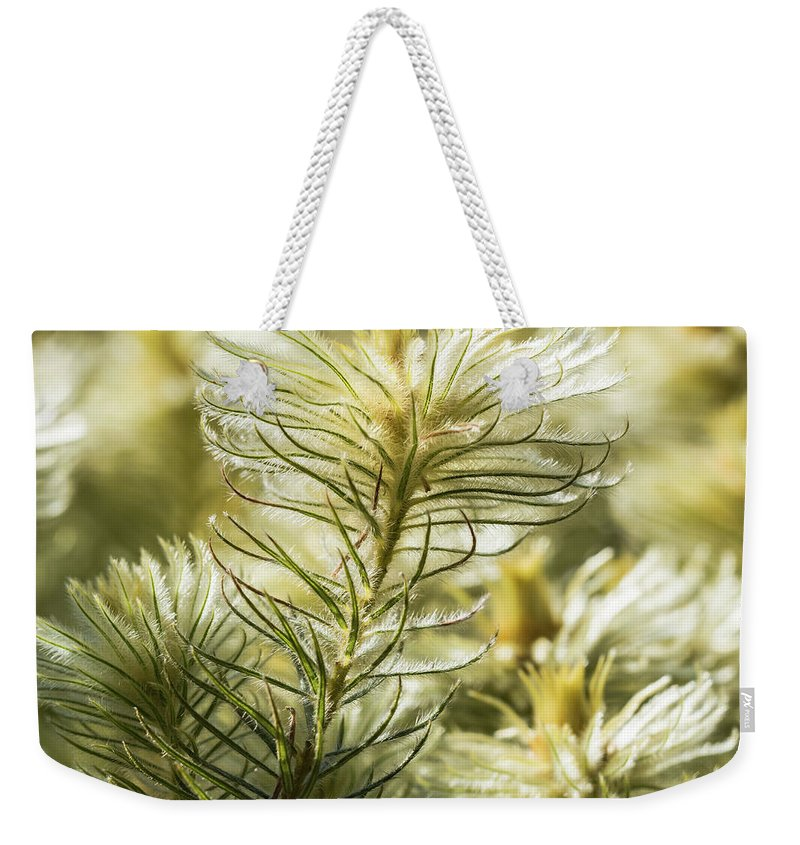 Featherheads Weekender Tote Bag featuring the photograph Featherheads by Robin Zygelman