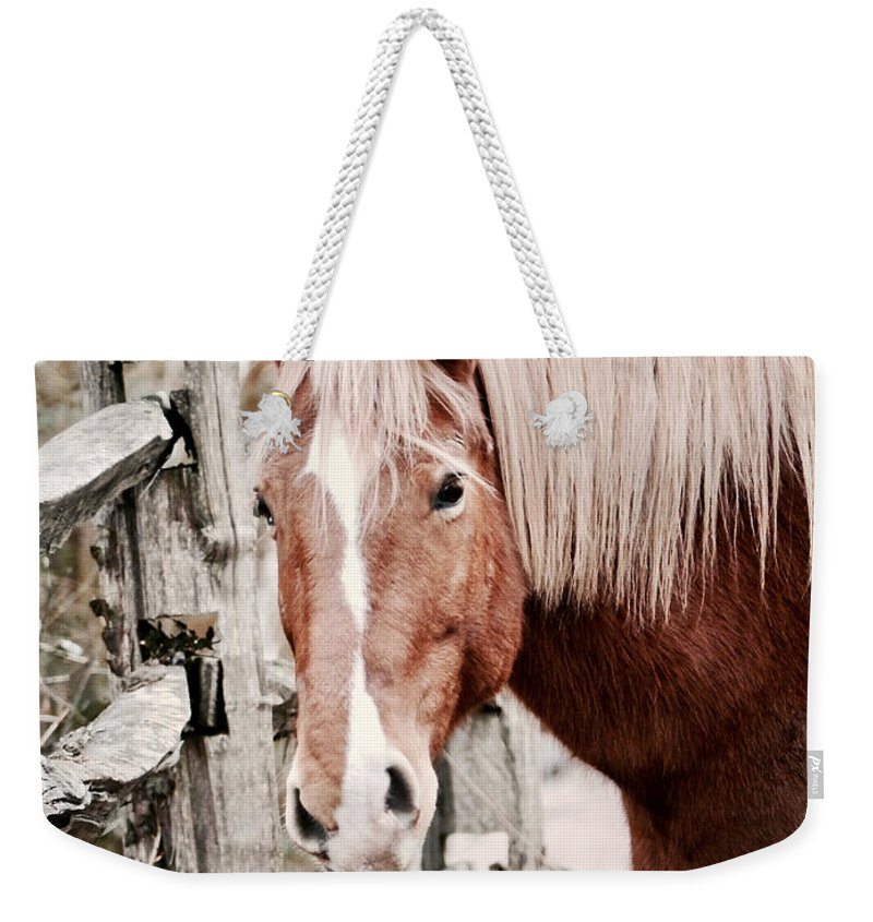 Horse Weekender Tote Bag featuring the photograph February Horse Portrait by Rachel Morrison