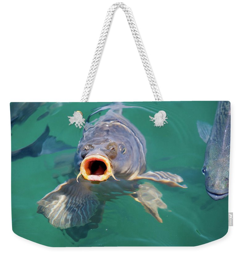 Feed Me Weekender Tote Bag featuring the photograph Feed Me by Anthony Jones