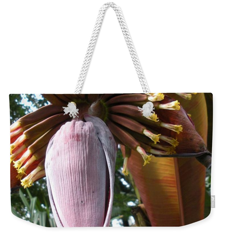Plant Weekender Tote Bag featuring the photograph Feed Me by Nelson Strong