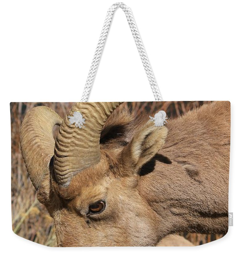 Nature Weekender Tote Bag featuring the photograph Feeding Time 2 by Tonya Hance