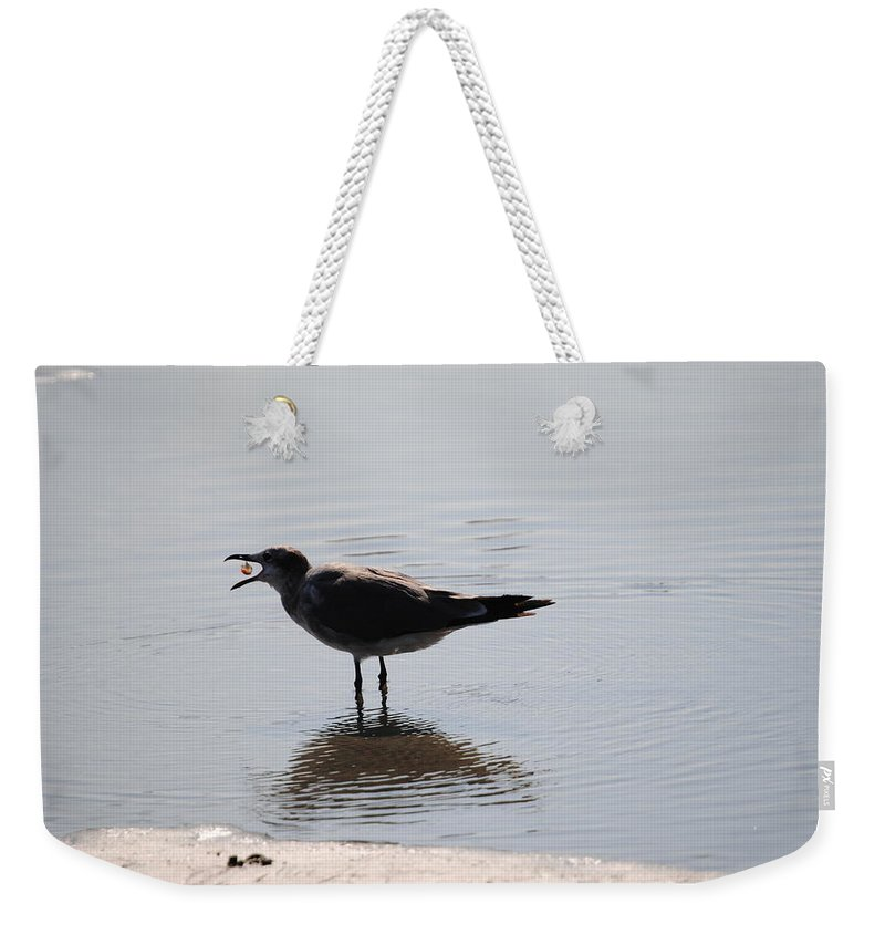 Beach Weekender Tote Bag featuring the photograph Feeding Time by Eric Liller