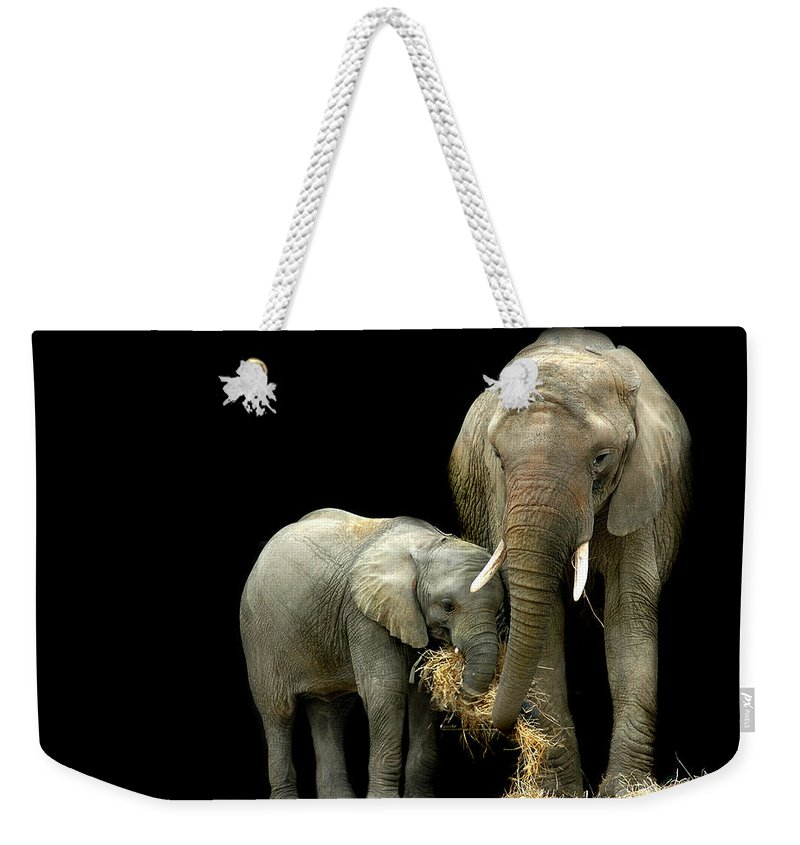 Elephant Weekender Tote Bag featuring the photograph Feeding Time by Stephie Butler