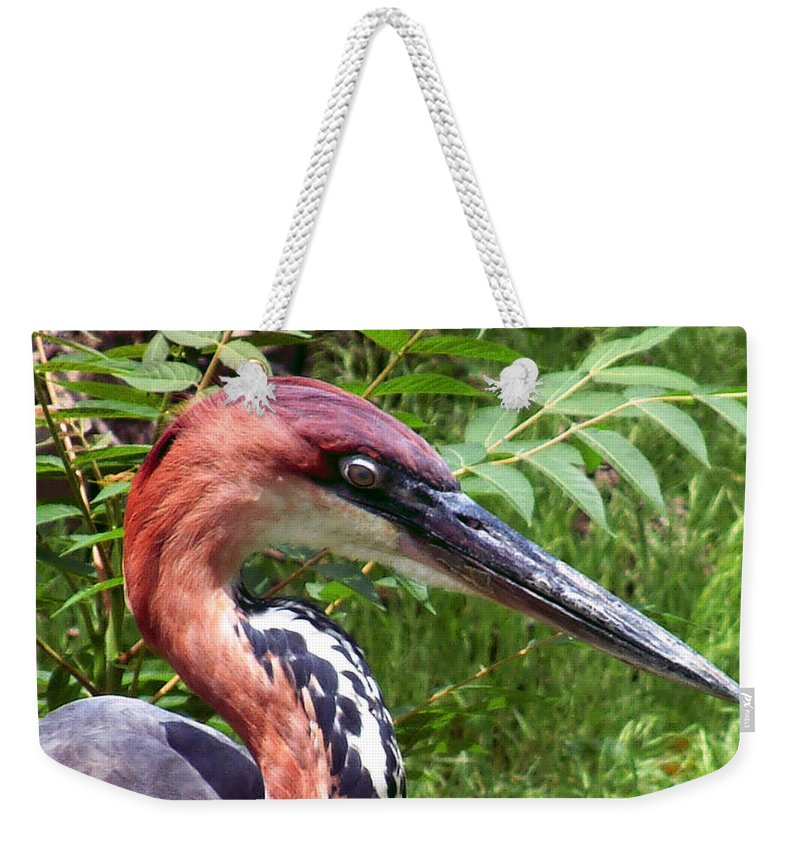 Bird Weekender Tote Bag featuring the photograph Feeling A Bit Peckish by RC deWinter