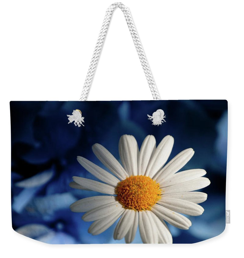 Daiy Weekender Tote Bag featuring the photograph Feeling Blue Daisies by Trish Tritz