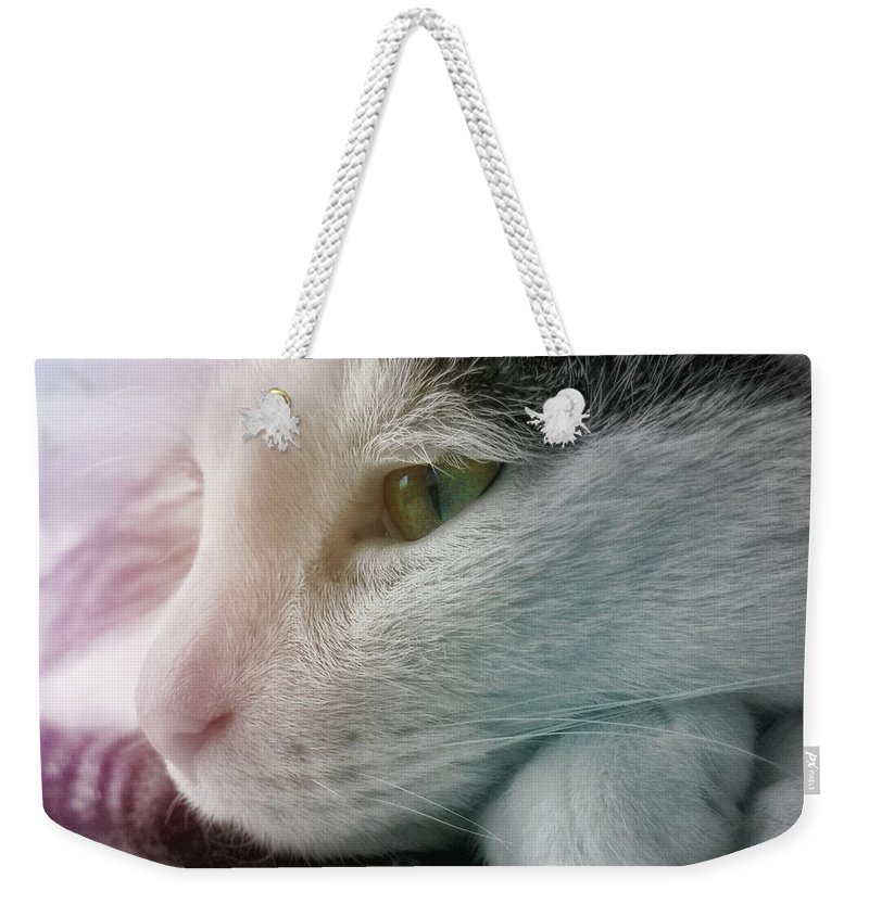 Cat Weekender Tote Bag featuring the photograph Feline Zen by JAMART Photography