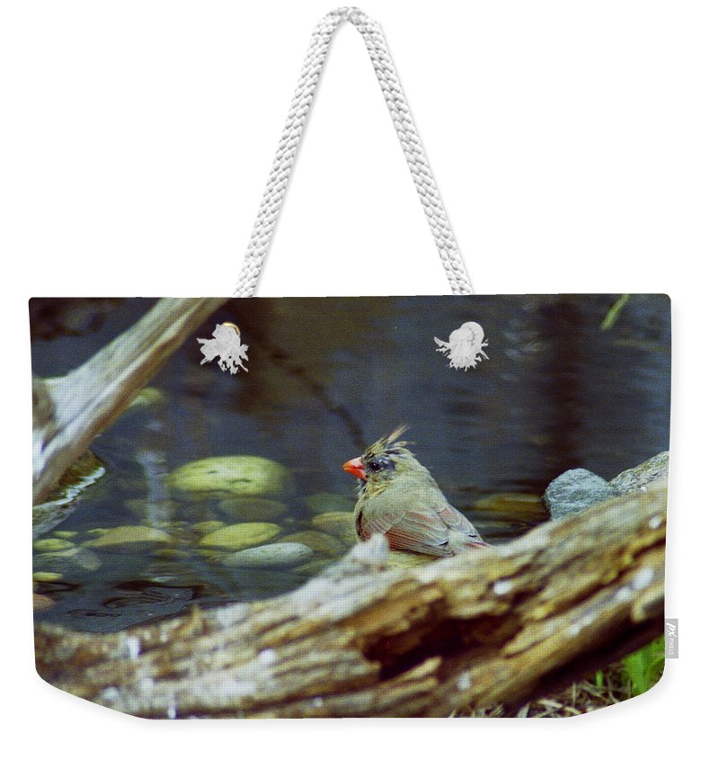 Female Weekender Tote Bag featuring the photograph Female Cardinal by Michael Peychich
