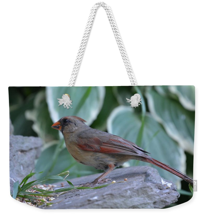 Cardinal Weekender Tote Bag featuring the photograph Female Northern Cardinal by Shelley Smith
