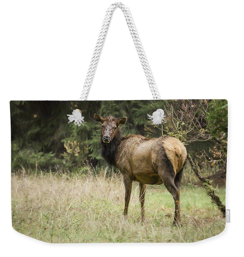 Cow Elk Weekender Tote Bag featuring the photograph Female Wapiti by Belinda Greb