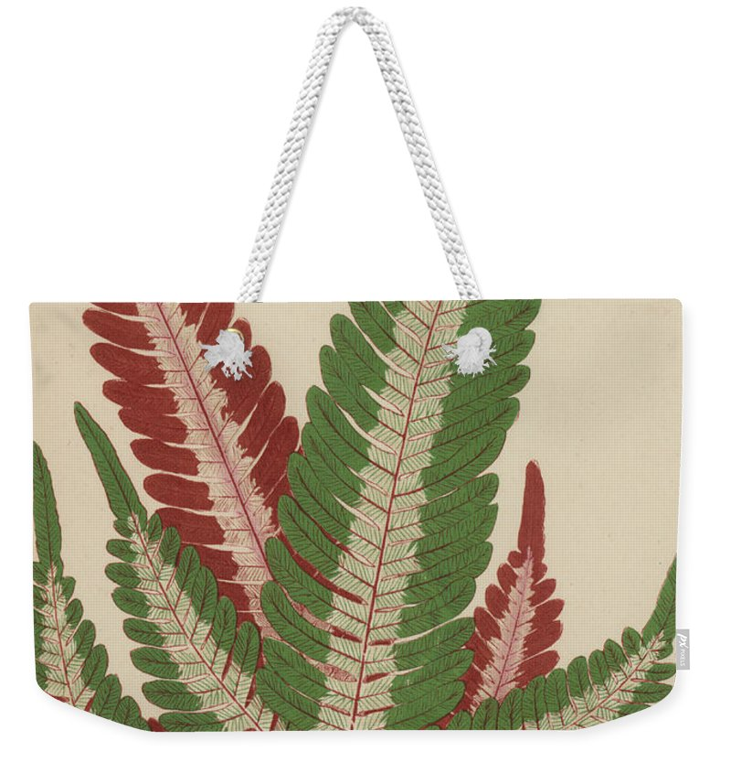 Fern Weekender Tote Bag featuring the painting Fern by English School