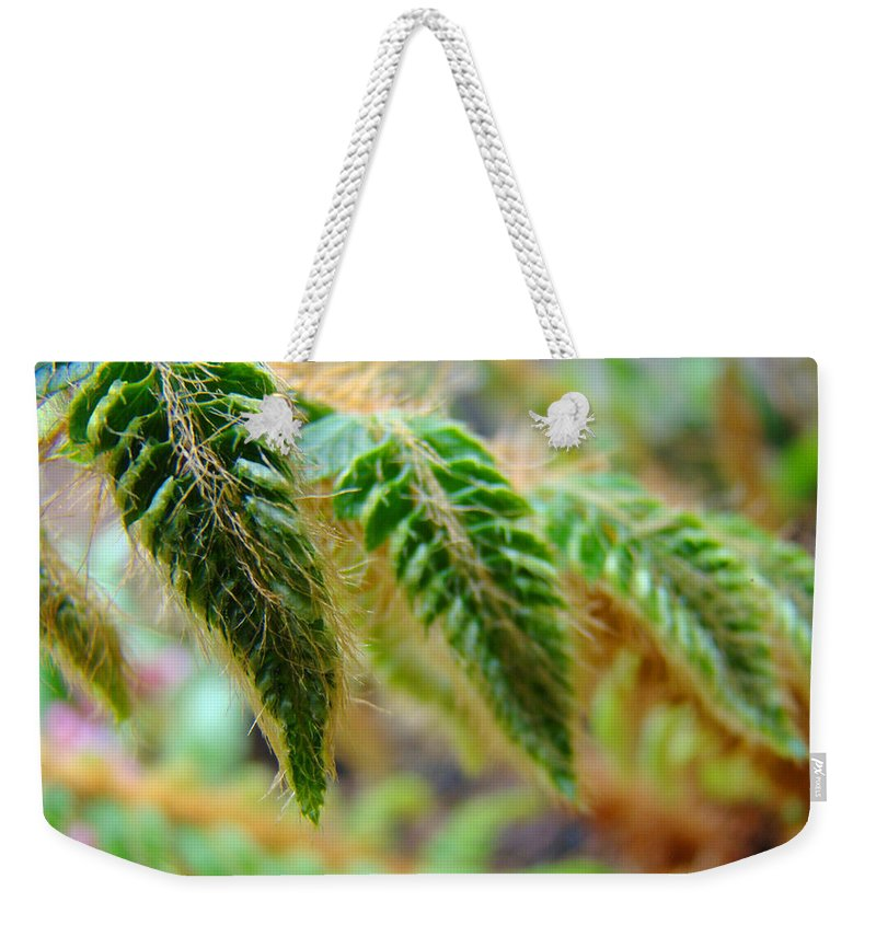Fern Weekender Tote Bag featuring the photograph Fern Fronds Leaves art prints Green Ferns Baslee Troutman by Patti Baslee
