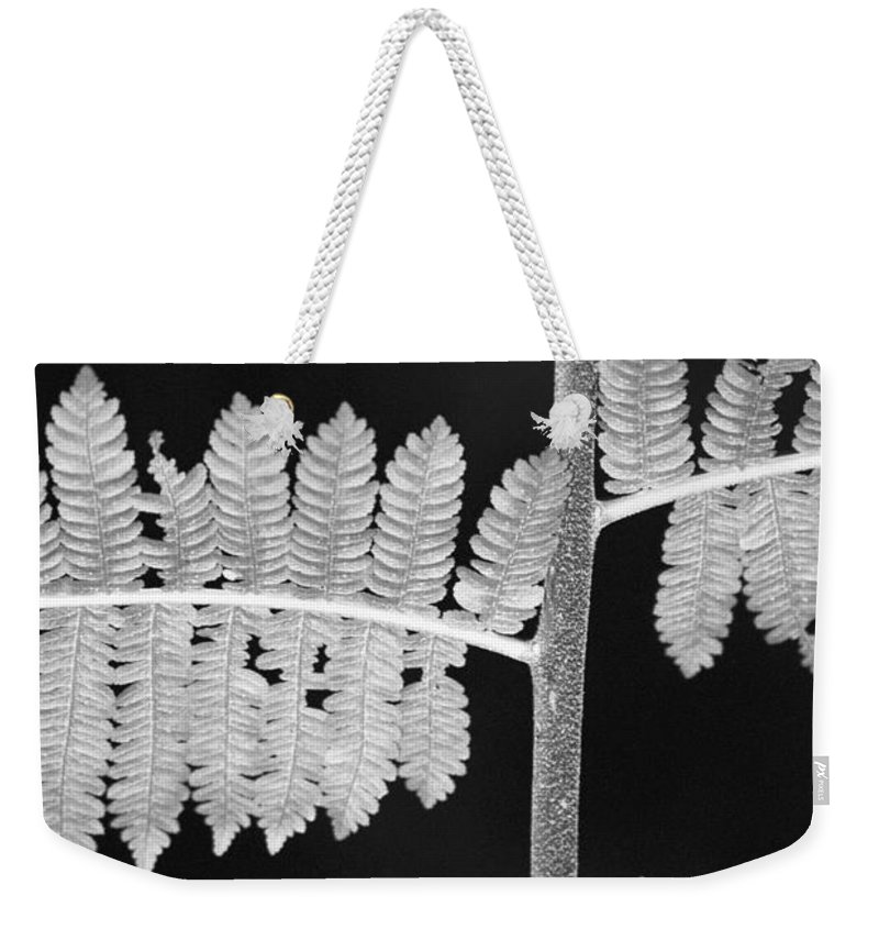 Fern Leaves Weekender Tote Bag featuring the photograph Fern Leaves 1 by Donna Corless