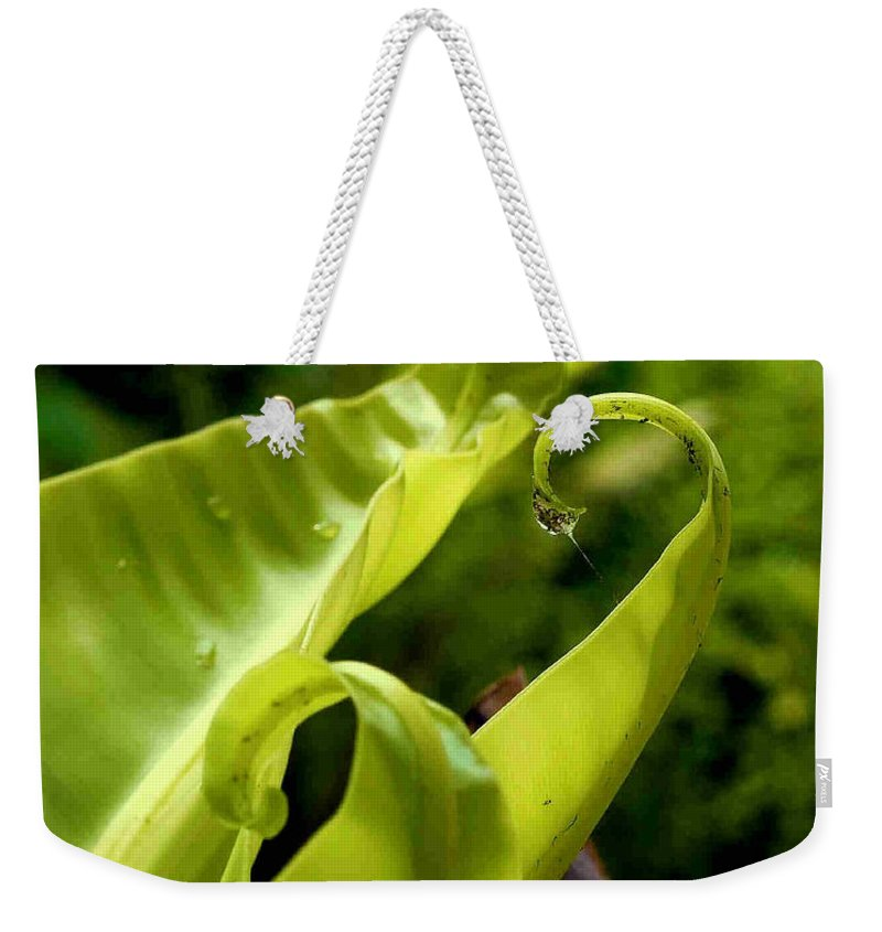 Fern Leaves Weekender Tote Bag featuring the photograph Fern Leaves by Dragica Micki Fortuna