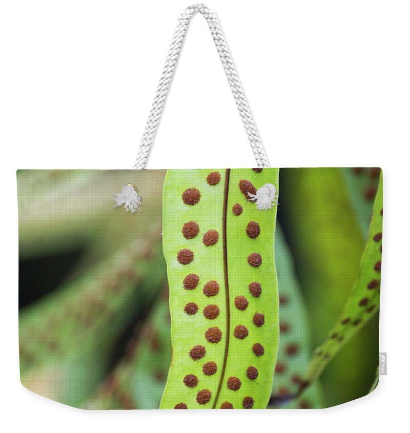 Fern Weekender Tote Bag featuring the photograph Fern by Nader Khoury