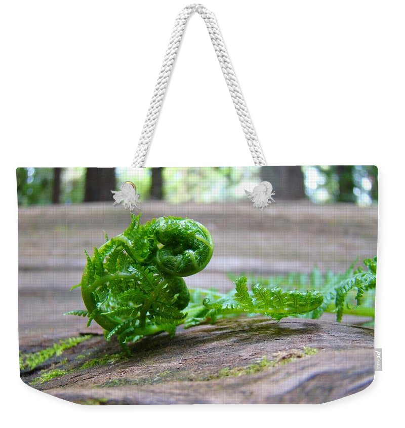 Fern Weekender Tote Bag featuring the photograph FERN on Big Redwood Tree Art Prints Baslee Troutman by Patti Baslee
