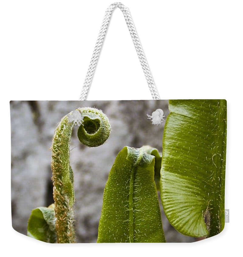 Irish Weekender Tote Bag featuring the photograph Fern Study At Blarney Castle Ireland by Teresa Mucha
