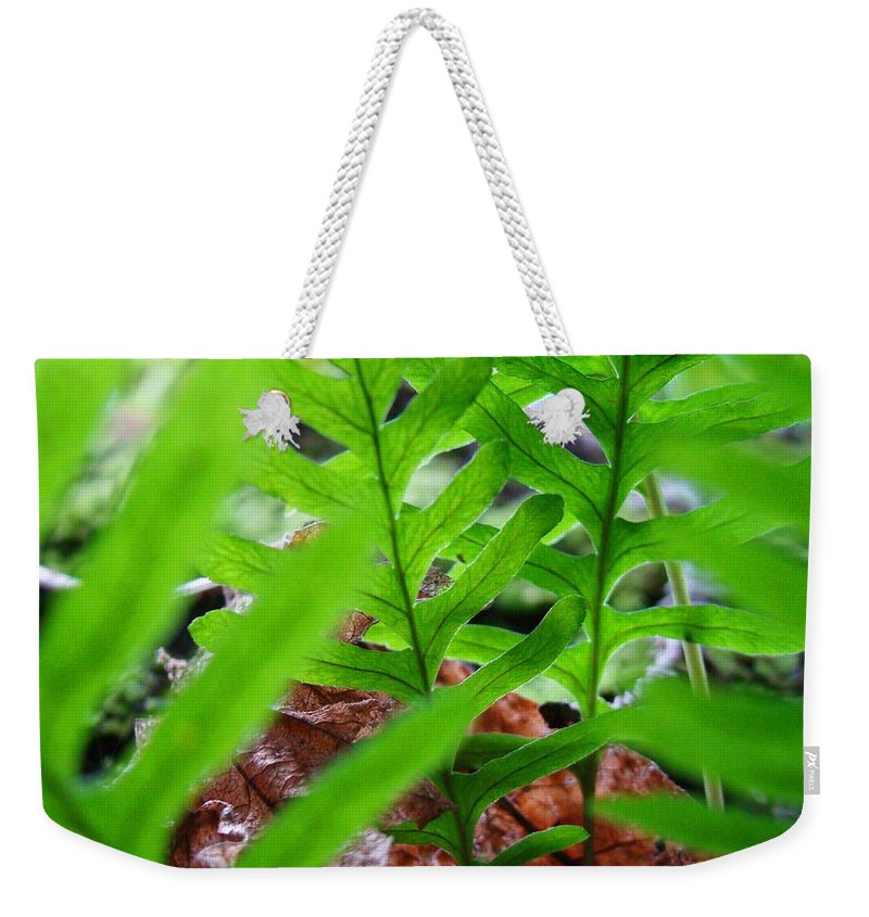 Fern Weekender Tote Bag featuring the photograph FERNS Art Prints Forest Ferns Giclee Art Prints Basle Troutman by Patti Baslee