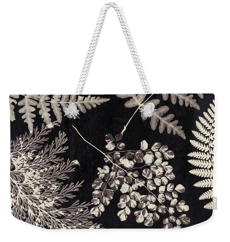 Photo Weekender Tote Bag featuring the photograph Ferns by English School