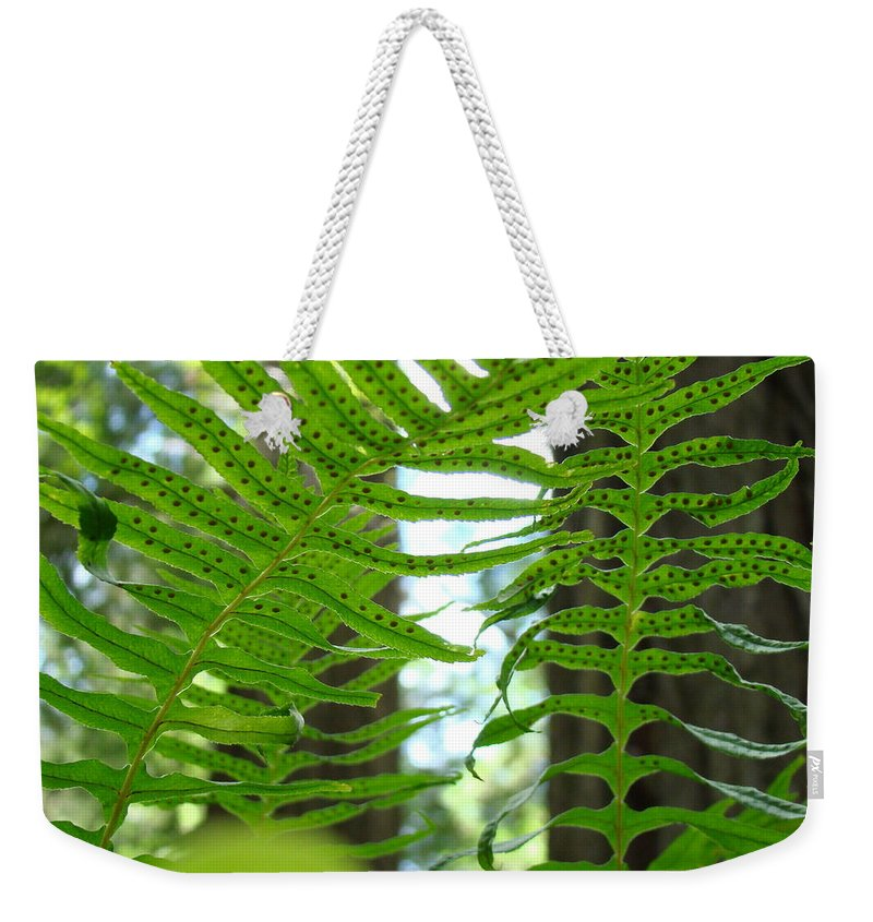 Fern Weekender Tote Bag featuring the photograph FERNS GREEN REDWOOD FOREST FERN Giclee Art Prints Baslee Troutman by Patti Baslee