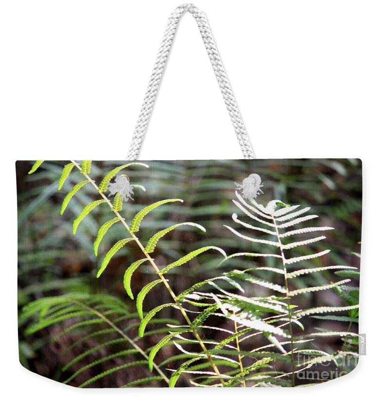 Ferns Weekender Tote Bag featuring the photograph Ferns In Natural Light by Carol Groenen