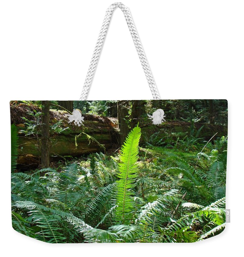 Fern Weekender Tote Bag featuring the photograph FERNS Sunlit Redwood Forest Fern Giclee Art Prints Baslee Troutman by Patti Baslee