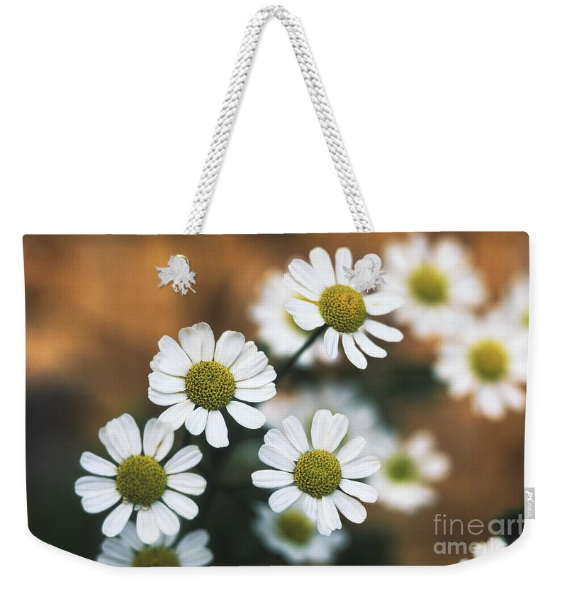 Herb Weekender Tote Bag featuring the photograph Feverfew Plant by George Mattei
