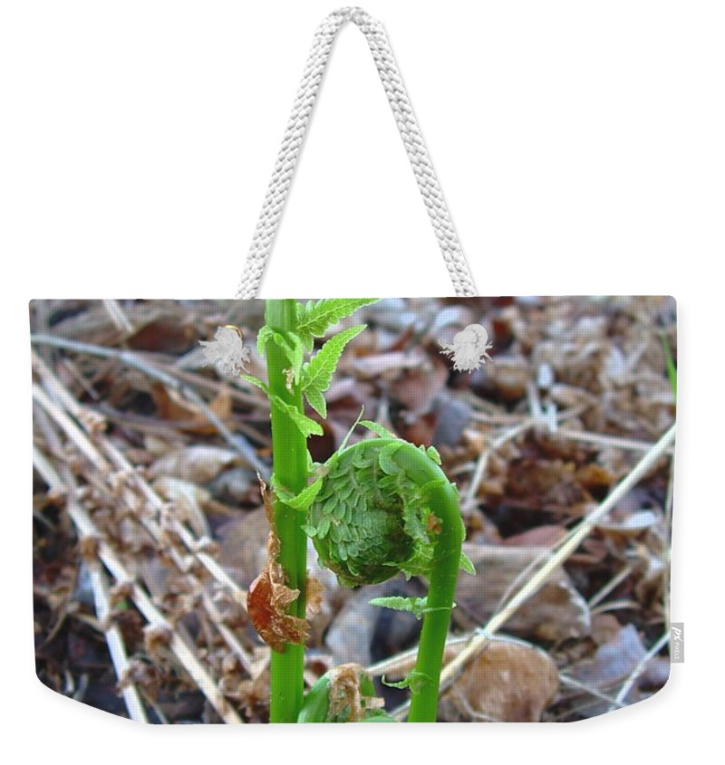 Fiddleheads Weekender Tote Bag featuring the photograph Fiddlehead Ferns In Spring by Kent Lorentzen