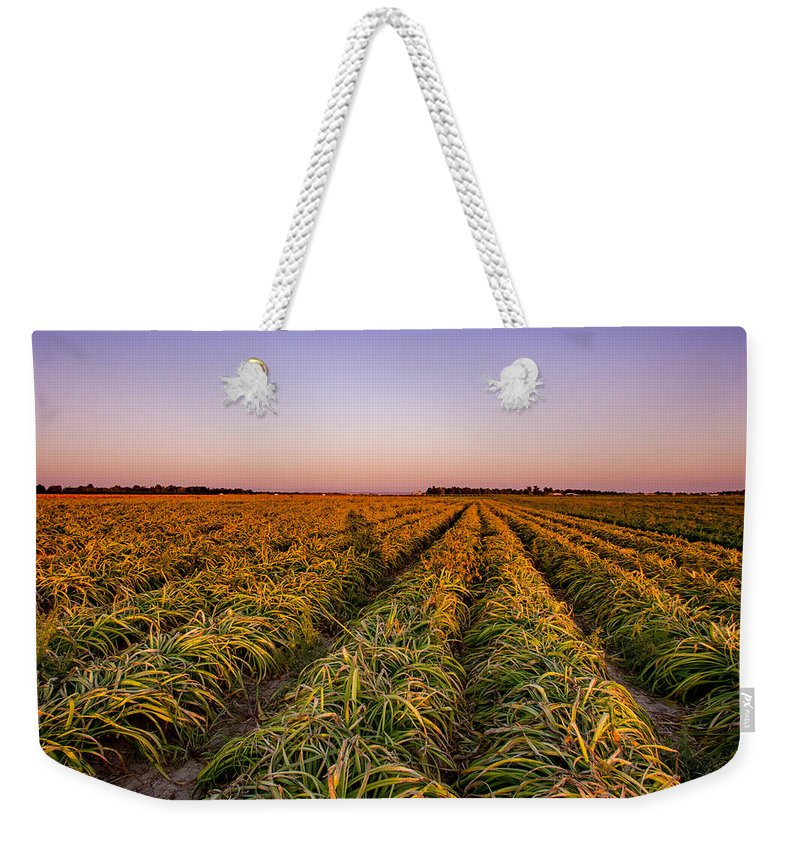 Flowers Weekender Tote Bag featuring the photograph Field Lines by Mark Perelmuter