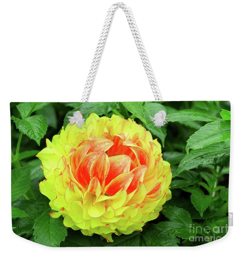 Dahlia Weekender Tote Bag featuring the photograph Fiery Yellow by Kevin Richardson