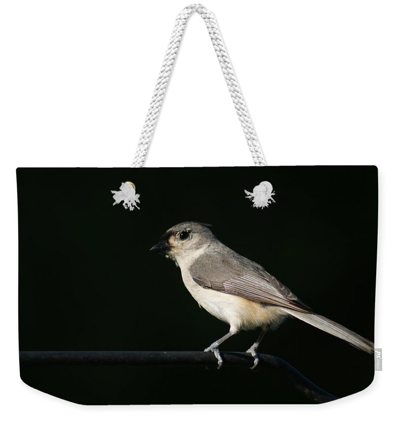 Bird Weekender Tote Bag featuring the photograph Finch by Heidi Poulin