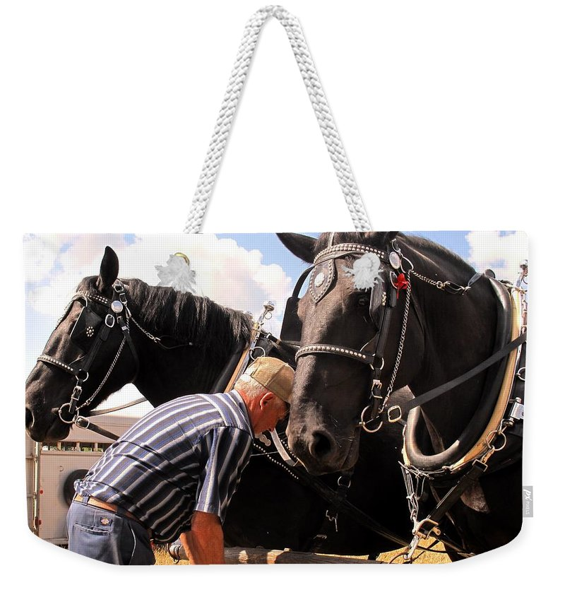 Horses Weekender Tote Bag featuring the photograph Fine Tuning by Ian MacDonald