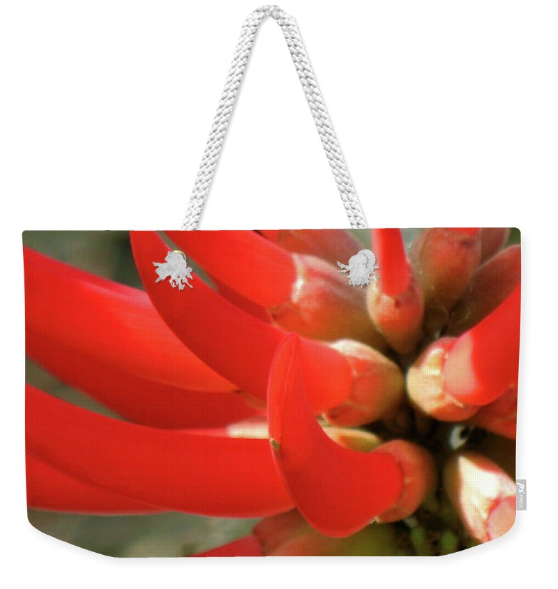 Red Flower Fire Flame Spike Weekender Tote Bag featuring the photograph Fire Spike by Christina Geiger