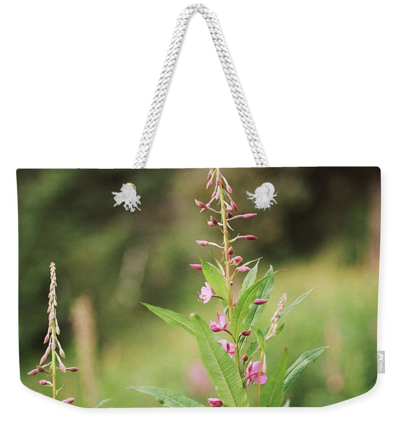 Fireweed Weekender Tote Bag featuring the photograph Fireweed by Kate Lamb