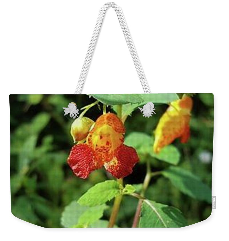 Weekender Tote Bag featuring the photograph First Bloom by Jessica Murphy