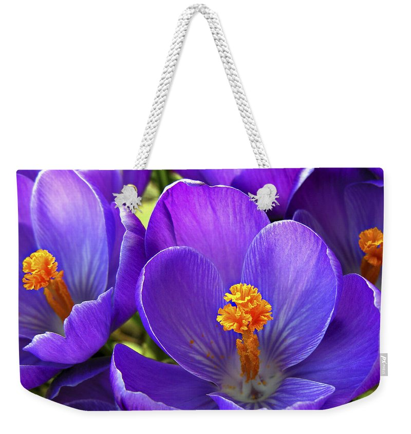 Flower Weekender Tote Bag featuring the photograph First Crocus by Marilyn Hunt