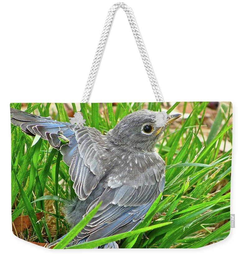 Bird Weekender Tote Bag featuring the photograph First Flight by Diana Hatcher