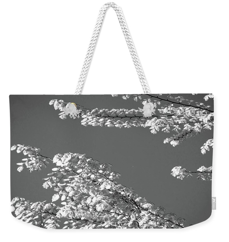 Tree Weekender Tote Bag featuring the digital art First Signs Of Spring V by DigiArt Diaries by Vicky B Fuller