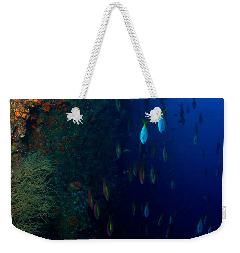 Diving Weekender Tote Bag featuring the photograph Fish Waterfall by Mumbles and Grumbles