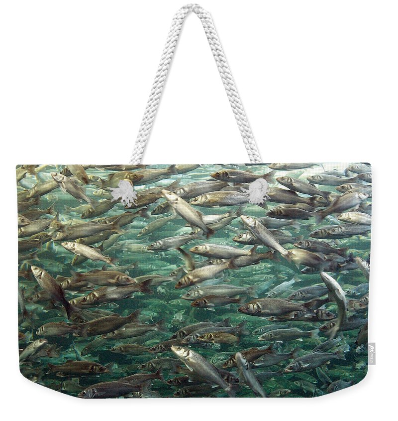 Spain Weekender Tote Bag featuring the photograph Fishes by Jouko Lehto