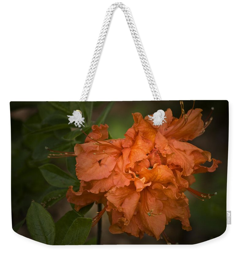 Flame Weekender Tote Bag featuring the photograph Flame Azalea by Teresa Mucha