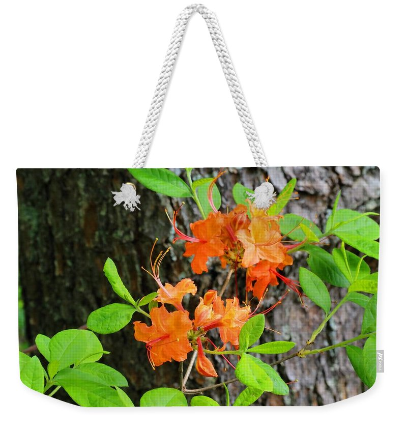 Flame Azalea Weekender Tote Bag featuring the photograph Flame Azaleas by Kathryn Meyer
