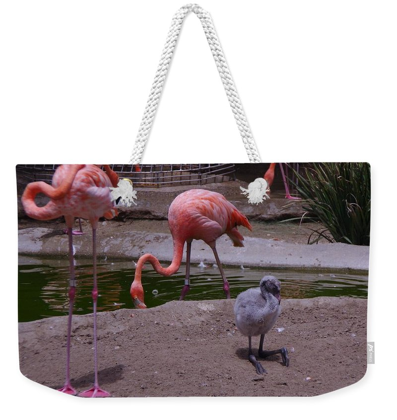 Flamingos Weekender Tote Bag featuring the photograph Flamgos 3 San Diego Zoo by Phyllis Spoor