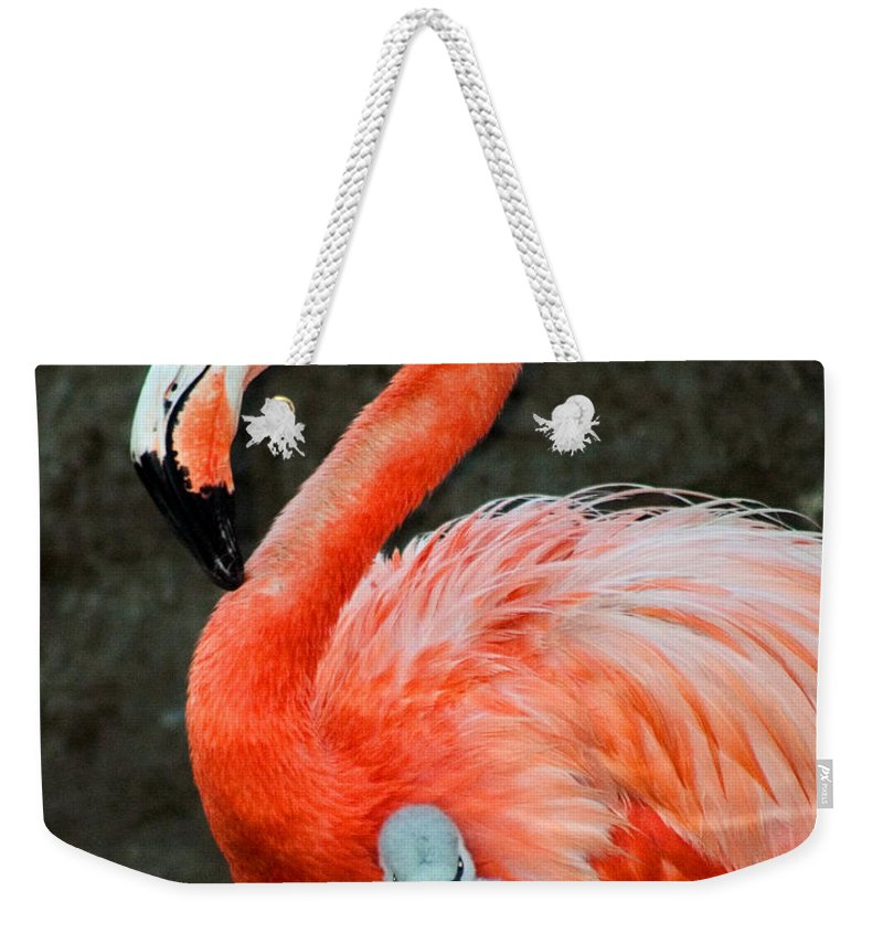 Bird Weekender Tote Bag featuring the photograph Flamingo And Baby by Anthony Jones