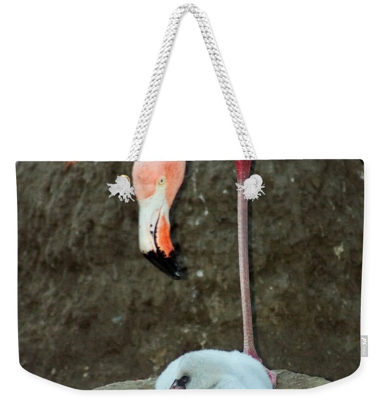 Pink Flamingo Weekender Tote Bag featuring the photograph Flamingo And Chick by Anthony Jones
