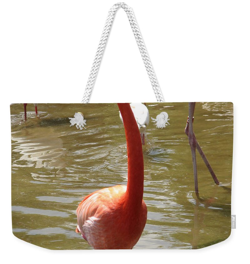 Flamingo Weekender Tote Bag featuring the photograph Flamingo II by Stacey May