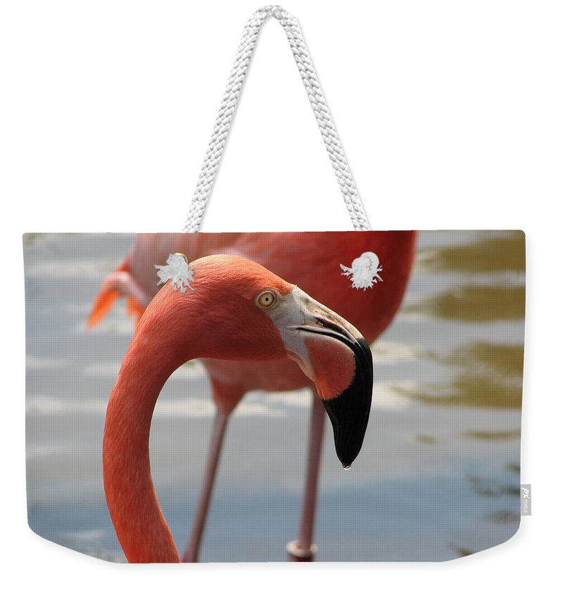 Flamingo Weekender Tote Bag featuring the photograph Flamingo by Stacey May
