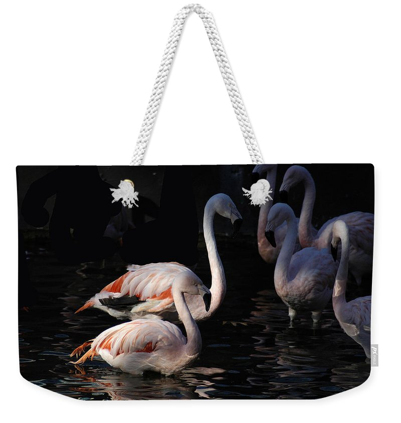 Flamingo Weekender Tote Bag featuring the photograph Flamingo Study - 2 by D'Arcy Evans